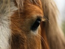 Treatment used in humans heals corneal damage in animals