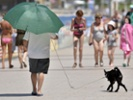 Hot pavement poses dangers to dogs.