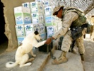 Canine leishmaniasis vaccine could reduce dog, human mortality