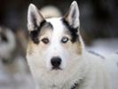 Researchers develop new canine influenza vaccines.
