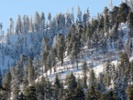 The link between early snowmelt and wildfire risk