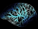NIH leaders say animals are essential to brain research