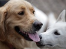 Dog study might prove the impossible is possible after all