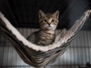 Paper raises questions about Trichomoniasis in cats and cattle.