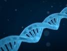 Mouse lemurs bridge genetic gap between people, mice