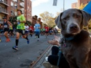 Not all dogs are meant to be running buddies, veterinarians say
