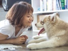 Clinical trials on osteosarcoma, solid tumor therapies enrolling pet dogs