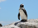 Satellites spot penguin poo to locate new colonies