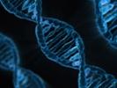 Engineered bacteria treats rare genetic disease in mice, monkeys