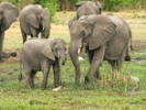 Findings from elephant genome could help fight cancer in humans