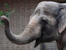 How elephants could be cancer's worst nightmare.