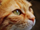 Researchers unsure how newly identified viruses affect cats