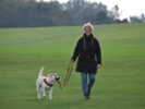 Immunosuppressant might extend healthy life spans of dogs, people
