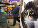 Retailers bet on the potential of bigger pet product sales