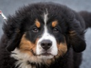 Veterinarians work to transform canine osteosarcoma care