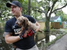 Hurricane refugee pets should be screened by a veterinarian