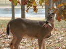 Scientists express concern that CWD will jump the gap from deer to people