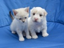 """""""Pound puppy"""" population booms as pandemic eases"""
