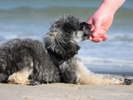 Researchers map canine Lyme disease rates to predict human infection rates.