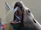 Sea lions and humans may benefit from epilepsy drug trials.