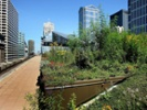 Green roofs spreading across US