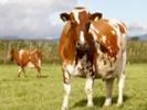 USDA delays effective date of organic livestock standards