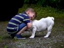 Combination therapy for canine osteosarcoma might translate to children