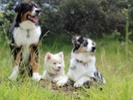 Geneticists construct dog family tree