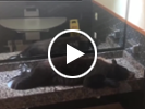Hey, Boo Boo! Hotel sinks aren't the place for bears to sleep