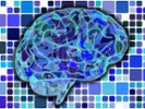 Study explores language switching in the brain