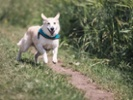 Clinical trial of gene therapy expands for dogs with joint pain