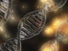Gene therapy tested in mice, NHPs targets type of ALS