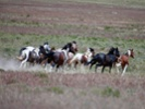 Could fire, wild horses limit spread of CWD?