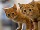 H7N2 strikes veterinarian working with infected NYC shelter cats.