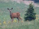 Experts explore possible link between prion diseases in deer, people