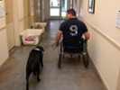 VA secretary: Canine research program saves veterans' and civilians' lives
