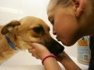 Studying childhood cancer in pets could yield benefits for dogs and humans.