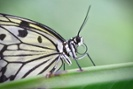 Butterfly tracking made possible with isotopes