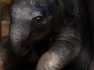 Elephant calf's recovery from deadly virus could lead to cure