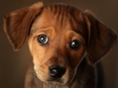 Collaboration speeds development of canine, human heart disease therapies