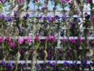 Fla. growers scramble to ship their tropical plants