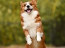 Reward training best for dogs, study suggests