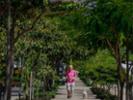 Green corridors help Colombian city beat the heat