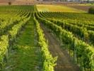 Wash. scientist invents better vineyard irrigation system