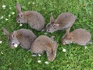 Poland to citizens: Take cue from rabbits and multiply