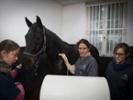 Equine veterinarians face unique demands