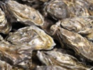 Calif. team to deploy sensor-equipped oysters