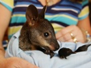 Bid through Jan. 27 on luxury stays to support Australian wildlife