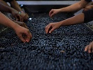 Capital is the biggest hurdle for Black wine entrepreneurs