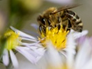 J&J uses voice to offer pollen data to allergy sufferers